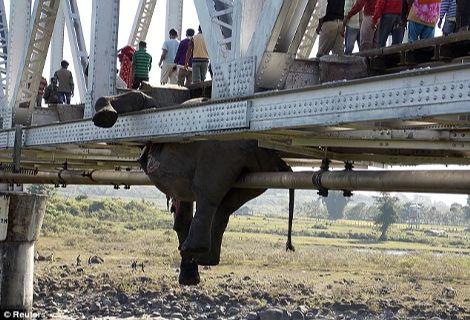 elefantes3 treno 14-11-2013